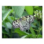 White and Black Butterfly #8 - 16X20 Small Poster