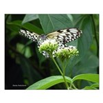 """White and Black Butterfly #6 -16""""X20"""" Sm"""