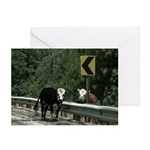 Cows Greeting Cards (Pk of 10)