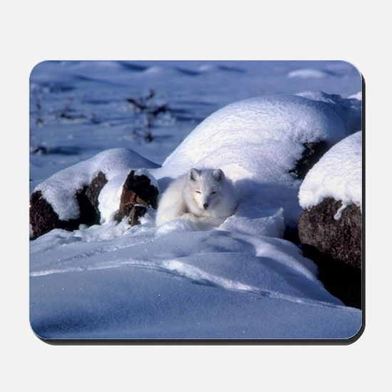 Arctic Fox Mousepad