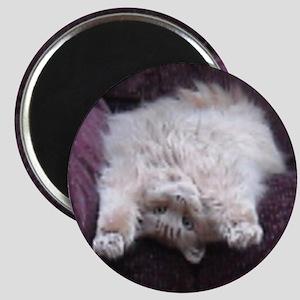 Fuzzy Yoga Cat Magnet