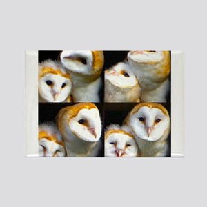 Owl523c Magnets