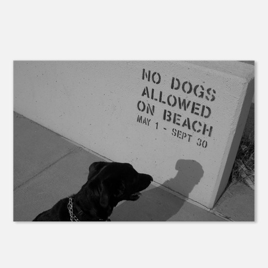 Black Lab  No Dogs Allowed Postcards (Package of 8