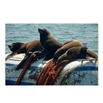 Seals over a Barrel Postcards (Package of 8)