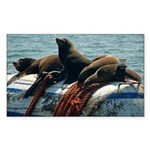 Seals over a Barrel Rectangle Sticker 50 pk)