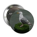Bird on a Pole 2.25