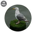 Bird on a Pole 3.5