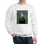 Bird on a Pole Sweatshirt
