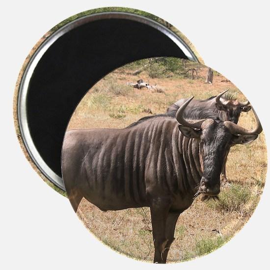 Wildebeests Magnet