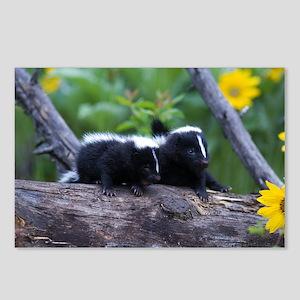 Skunk Postcards (Package of 8)