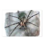 Funnel Web Spider Postcards (Package of 8)