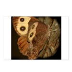 Common Wood Nymph Postcards (Package of 8)