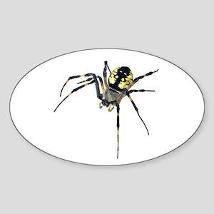 Argiope Garden Spider Oval Sticker