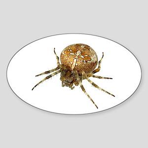 Golden Cross Spider Oval Sticker
