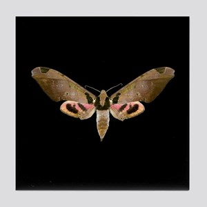 Ypsilon Sphinx Moth Tile Coaster