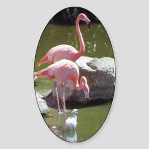 Growing Up Flamingo Oval Sticker