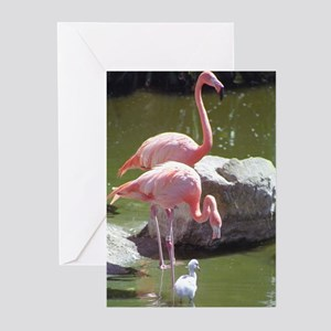 Growing Up Flamingo Greeting Cards (Pk of 10)