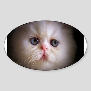 White Persian Oval Sticker