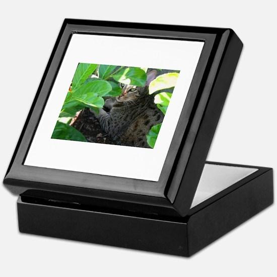 Ocicat Keepsake Box