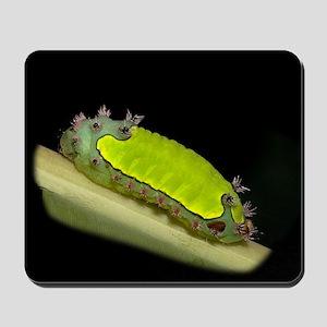 Acharia Caterpillar Mousepad