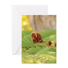 Fiddlehead Fern Greeting Card