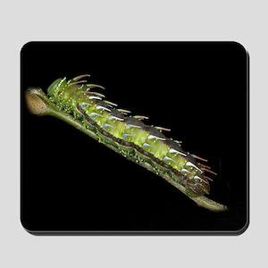 Syssphinx Caterpillar Mousepad