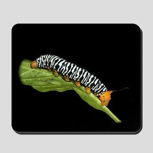 Sorocaba Caterpillar Mousepad