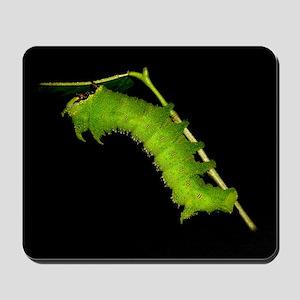 Schausiella Caterpillar Mousepad