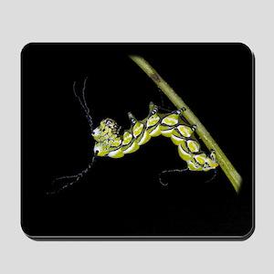 Bramhea Caterpillar Mousepad