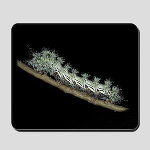 Pamina Caterpillar Mousepad