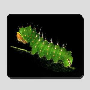 Polyphemus Caterpillar Mousepad