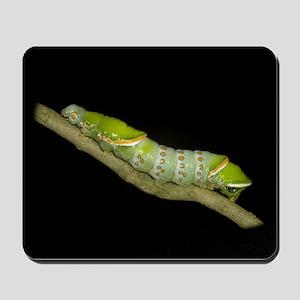 Naprepa Caterpillar Mousepad