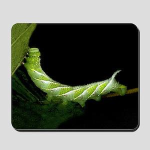 Lanuginosa Caterpillar Mousepad