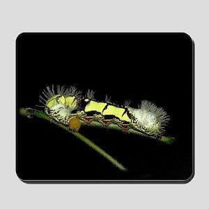 Lirimiris Caterpillar Mousepad