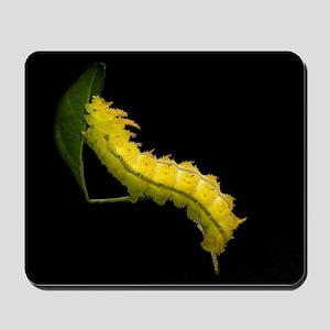 Ormondei Caterpillar Mousepad