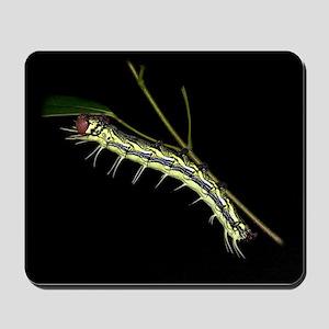 Dudusa Caterpillar Mousepad