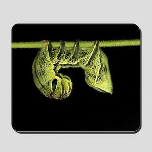 Crinodes Caterpillar Mousepad