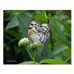 White Butterfly Small Poster