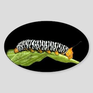 Sorocaba Caterpillar Oval Sticker