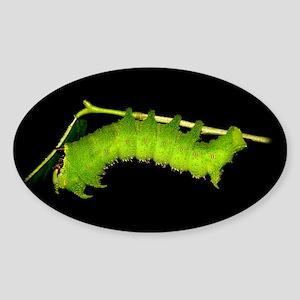Schausiella Caterpillar Oval Sticker