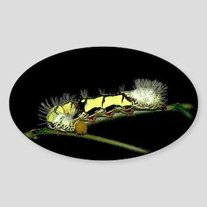 Lirimiris Caterpillar Oval Sticker