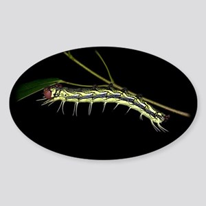 Dudusa Caterpillar Oval Sticker