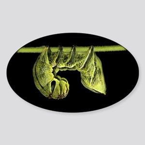 Crinodes Caterpillar Oval Sticker