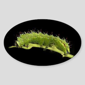 Copaxa Caterpillar Oval Sticker