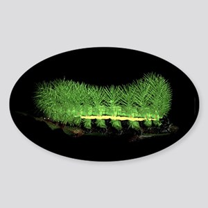 Belti Caterpillar Oval Sticker
