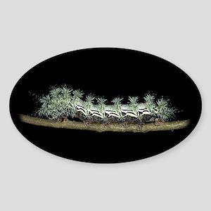 Pamina Caterpillar Oval Sticker