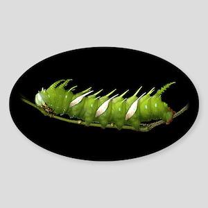 Adeloneivaia Caterpillar Oval Sticker