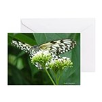 White Butterfly 6CR - 5X7Greeting Cards (Pk of 10)