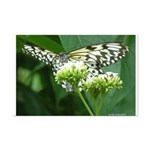 Butterfly 6CR - 17X11 Mini Poster Print