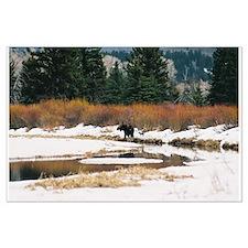 Moose Large Poster